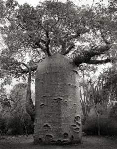 ancient-trees-beth-moon-11